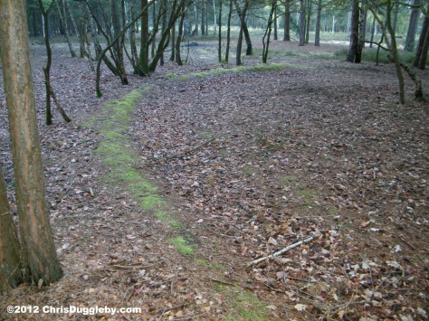 Horsell Common Barrow Nr 4 Left side