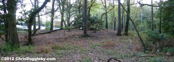 Horsell Common Bell Barrow Nr 2 Rear view