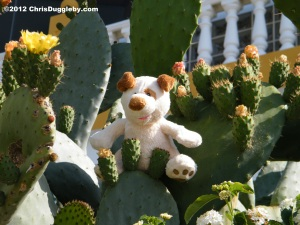 A tip - when playing hide and seek on the beach don't hide in a Cactus!