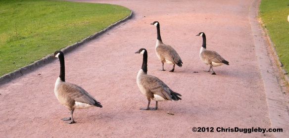 Many other local birds meet for sports and fun in the Bochum Stadtpark