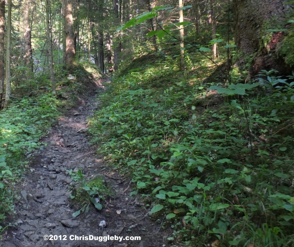 The narrow forest path to Schwarzenberg starts off very wet and slippery