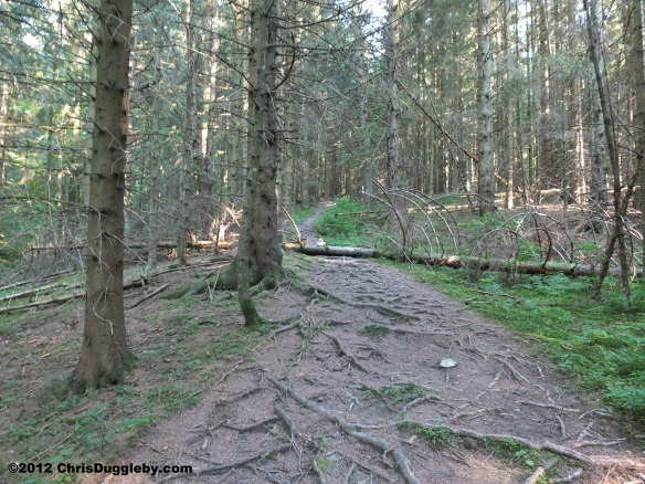 Gradually the steepness of the forest path decreases but watch out for fallen trees!