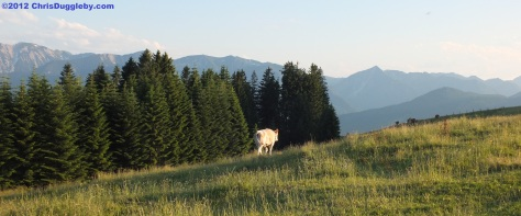 Why does the milk from Bavaria taste so good ? Look at the view - the cows are simply happy!