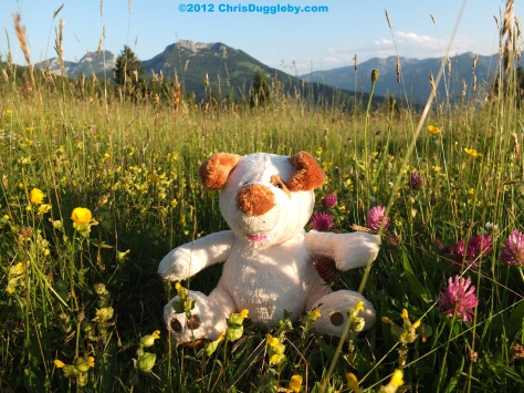 RISKKO amongst some alpine flowers on the top of the Schwarzenberg mountain