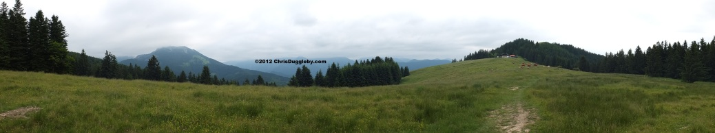 Schwarzenberg Mountain Scene above Bad Feilnbach with Cows and Cow-bells