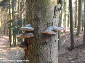 Fungus in the Schwarzenberg forest near Bad Feilnbach, Bavaria