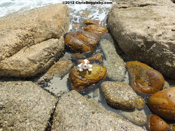 RISKKO explores the Rock Pools around Sandy Bay looking for pearl oysters
