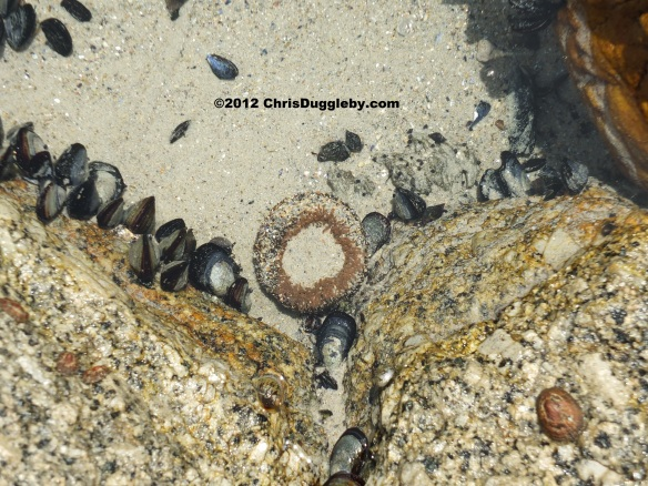 A perfectly formed doughnut growing in the rock pools