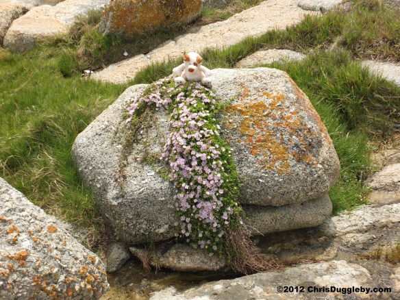 Who needs a rockery when the flowers just spring out of the rocks on your door step - South Africa - a model for heaven's garden