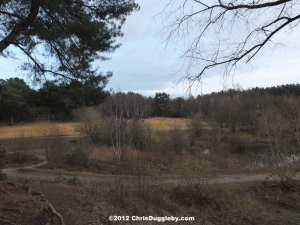 Horsell Common sand pits where H G Wells' Martian Invaders Landed in