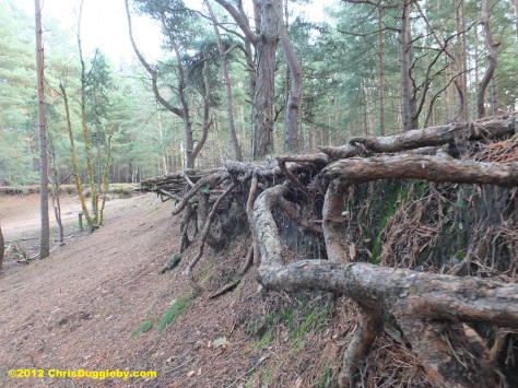 More interesting tree root structures where H G Wells' Martian Invaders Landed