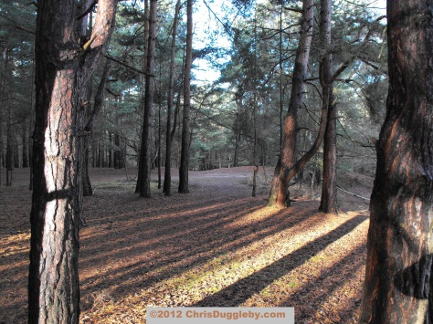 Horsell Common's sandy soil provides a soft jogging surface (especially for old joggers with complaining knees)