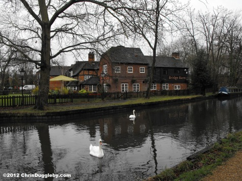 The Basingstoke Canal (with Swans) not far from Horsell Common