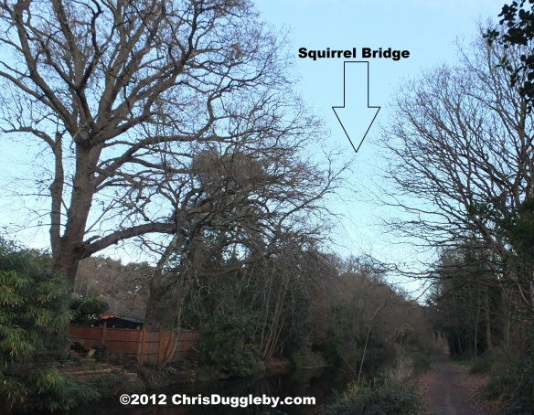 Side view of the Woking Squirrel Bridge which also serves as a romantic setting for squirrel 'passion' (and fights over nuts!)