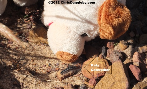 RISKKO invites hairy caterpillar Katy to be his friend