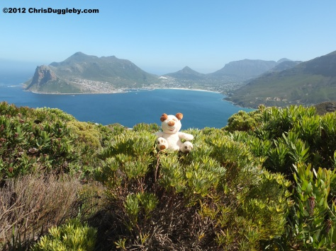 RISKKO's trek up Chapmans Peak looking for exotic wild flowers