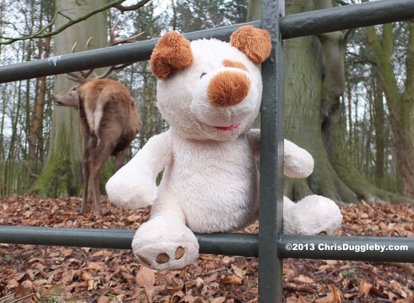 As RISKKO climbed through the fence Rudolf the Reindeer pulled himself to his feet