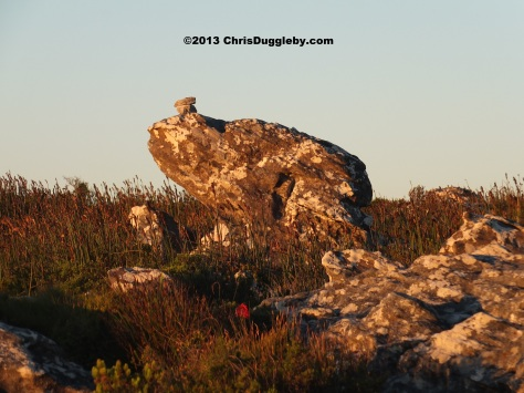 As the sun sets over Table Mountain the mysterious stone-frogs come out to play