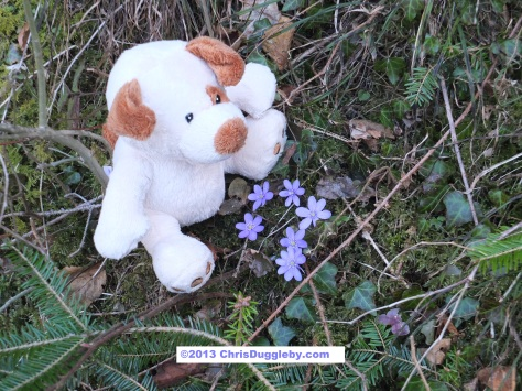As well as blue skies RISKKO finds the alpine forests are covered in his favourite blue Spring flowers