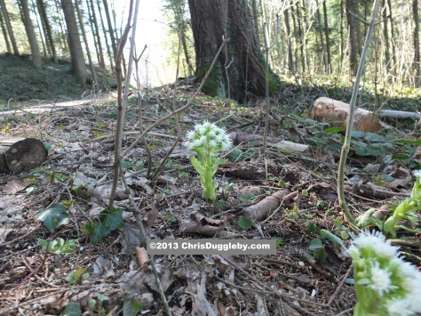 Everywhere in the Bavarian Forests new growth can be seen as Spring returns