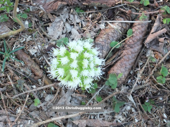 To observe nature at work in the Forests just look down at the fantastic flowers like this one