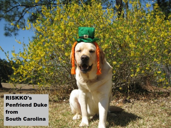 RISKKOs Penfriend Duke on St Patrick's Day (courtesy of Bob Duggleby, South Carolina)
