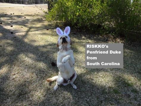 RISKKOs Penfriend Duke cunningly disguised as an Easter Bunny (courtesy of Bob Duggleby, South Carolina)