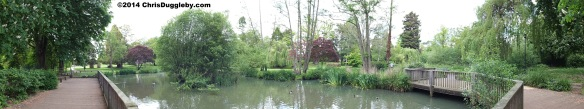 Panoramic View of Duck Pond in Woking Park