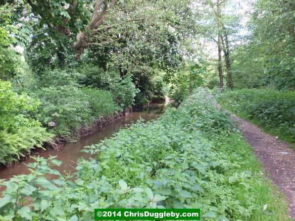 Hoebridge Stream from Woking Park