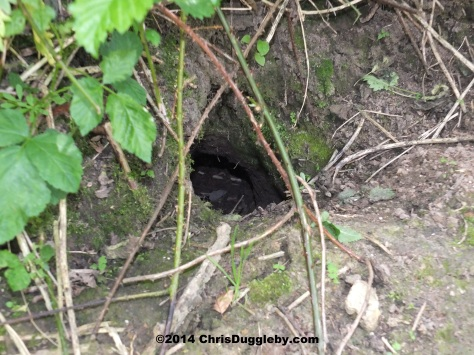 Rabbit Hole Next To Hoebridge Bridleway