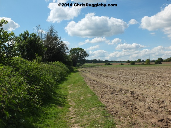 Path Through Open Farmland