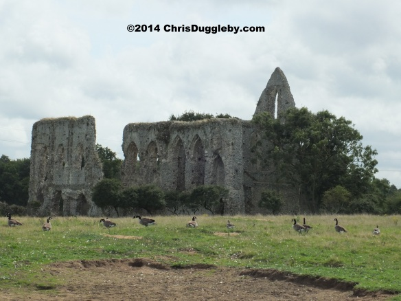 Wild Fowl enjoying a peaceful lunch at Newark Augustinian Priory