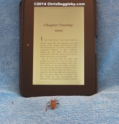 Beatrice Beetle reading the Kindle