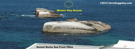 Whale photo including the shoreline to show how close inland they came on Feb 28th 2015