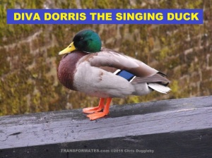Diva Dorris the Singing Duck Soloist with the TRANSFORMATES 變
