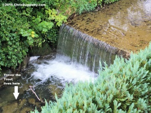 16 Trevor the Trout lives by the waterfall that is just outside the VALIUMM recording studios