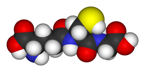 Typical Antioxidant Glutathione produced by living organisms