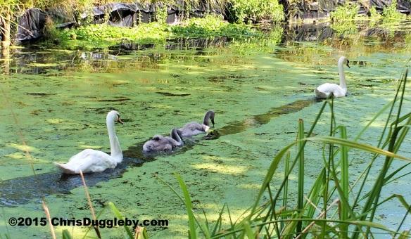 Birdlife 1 along the Basingstoke canal