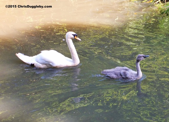 Birdlife 2 along the Basingstoke canal