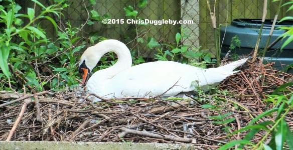 Birdlife 3 along the Basingstoke canal
