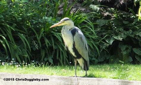 Birdlife 4 along the Basingstoke canal
