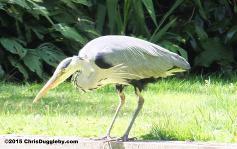 Birdlife 5 along the Basingstoke canal