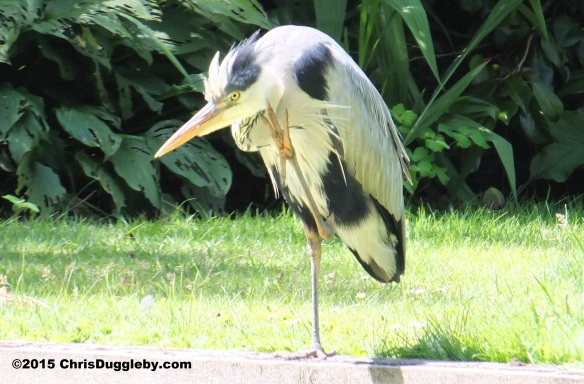 Birdlife 6 along the Basingstoke canal