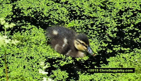 Gorgeous chick having fun on the Basingstoke canal