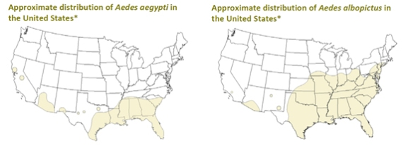 Aedes mosquito distribution maps US