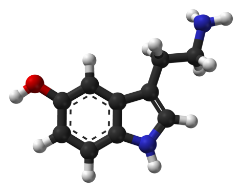 The Happiness Molecule Serotonin