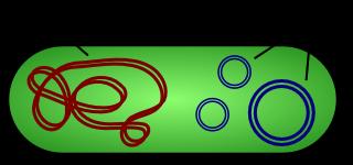 Bacterial Plasmids