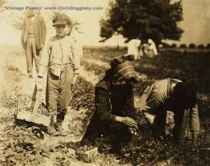 Pete Trombetta 10 years of age together with siblings of 11 and 14 pick berries at Johnson's Farm, Seaford, Del., USA (1910)