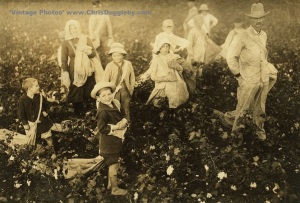 Children from 4 years of age pick cotton at Whiteside Farm near Waxahachie, Texas, USA (1913)
