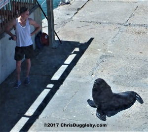 Customers buying fish in the harbour at Kalk Bay need to watch out for local bag snatchers